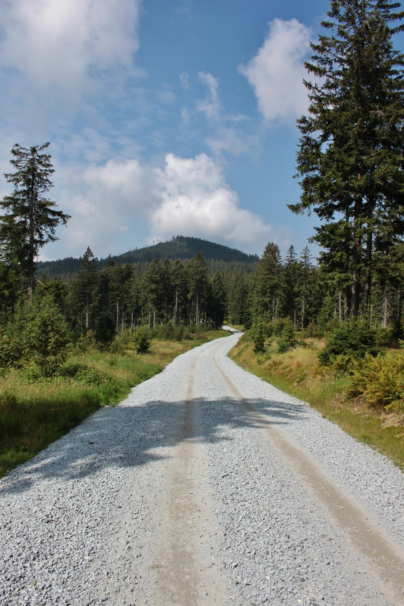 Großer Arber im Hintergrund - eine Forststraße im Vordergrund