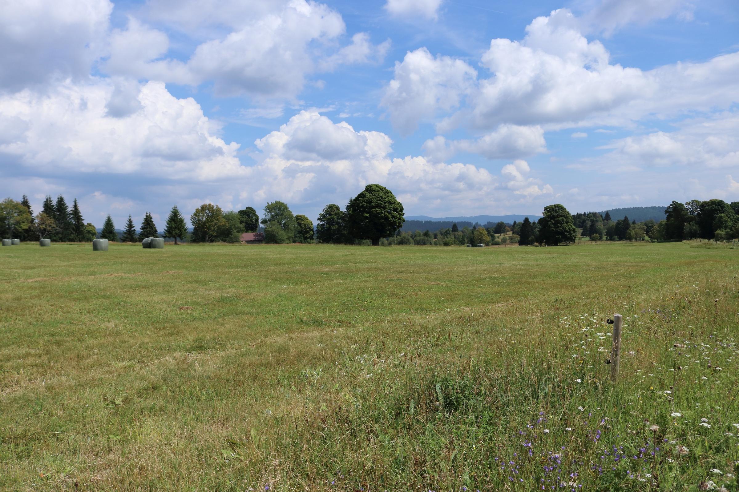Felder um Fürstenhut