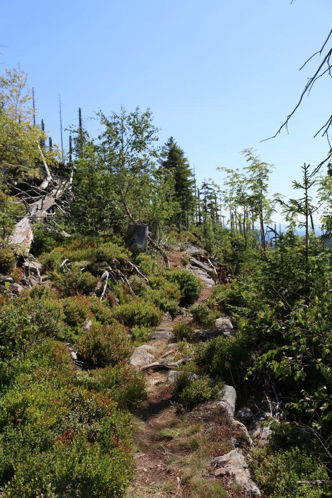Auf schmalen Pfaden zum Steinfleckberg