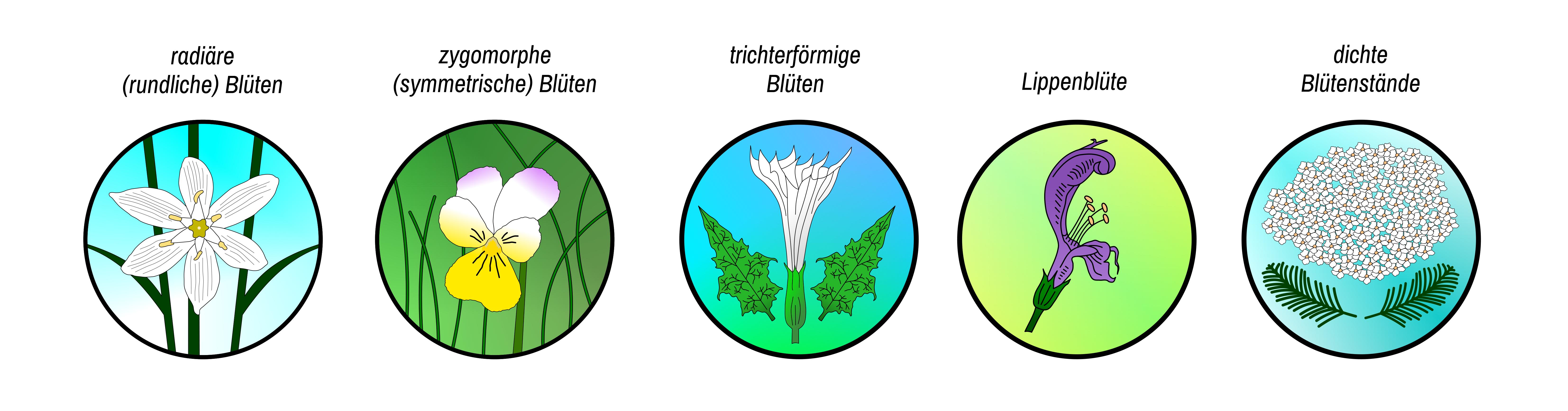 Pflanzenbestimmung - Blütenformen