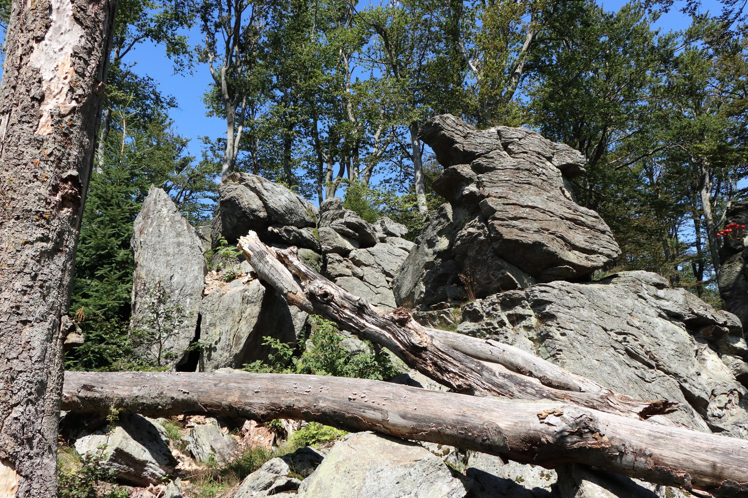 Der Gipfel des Hirschenstein