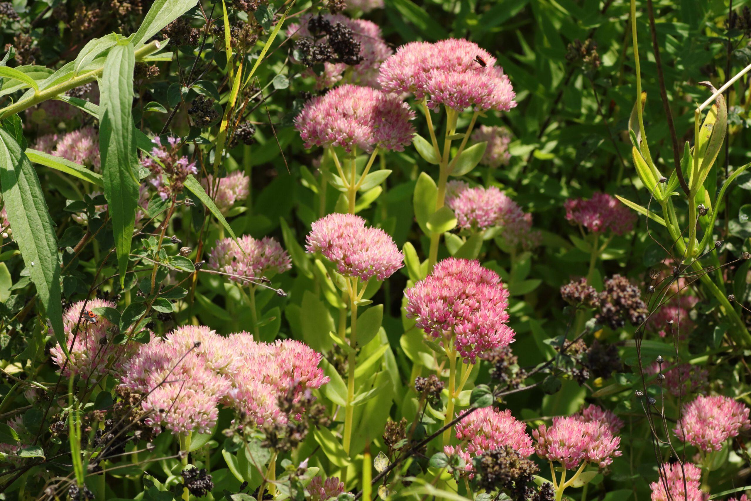 Blütengruppe der Pflanze