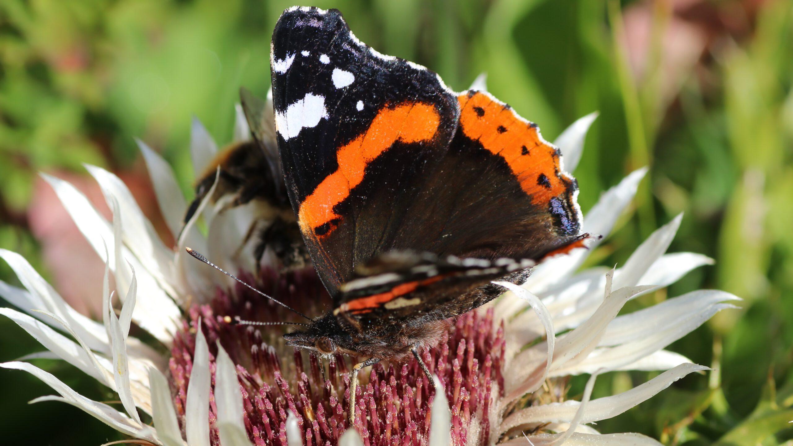 Schmetterlinge & Falter